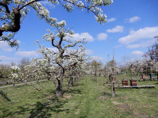 De Zoete Aarde in het voorjaar